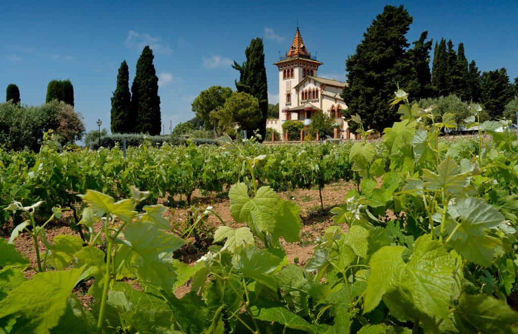 Lichte Rode Wijn : Rode wijn